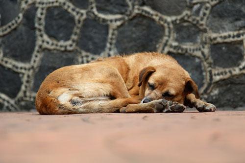 12 diario di un cane