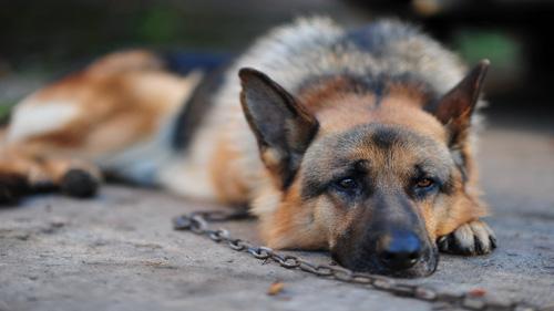 7 diario di un cane