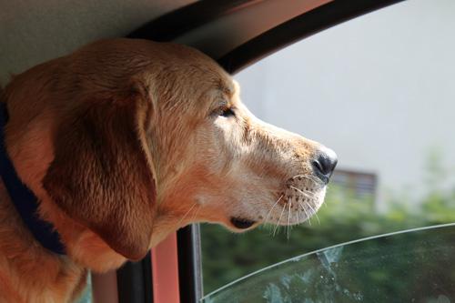 8 diario di un cane