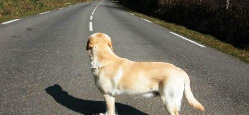 9 diario di un cane
