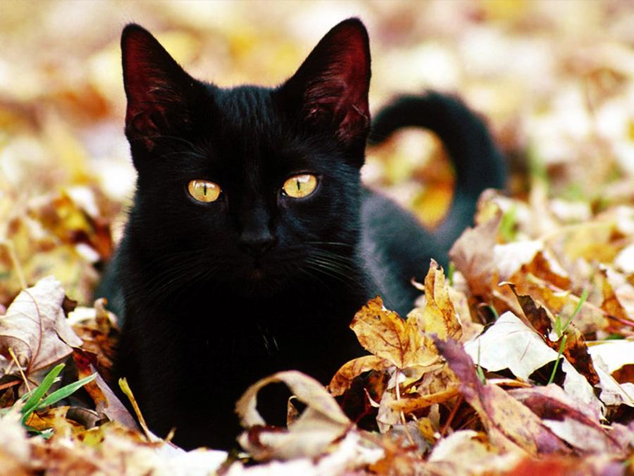 gatto (122)