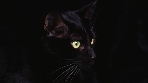 gatto (123)