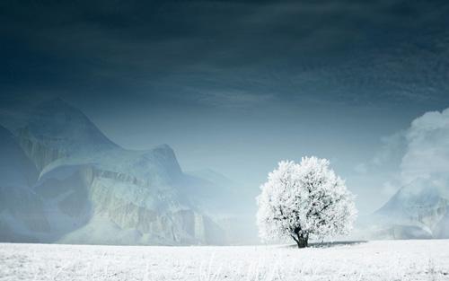 derevo-sneg-zima-gory900