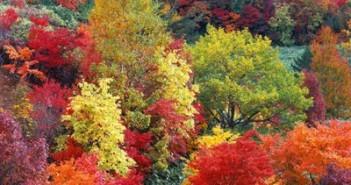 foto_autunno_7036
