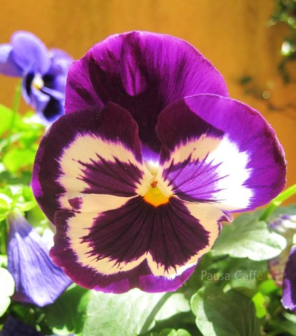 Giardino Cosa Piantare A Febbraio: Maggio 2011 ... Un Giretto In Giardino