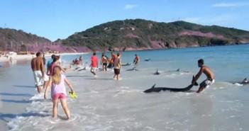 Delfini arrenati