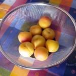 muffin albicocca (1) F
