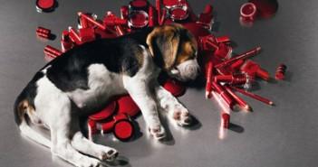 Beagle vivisezione cosmetici