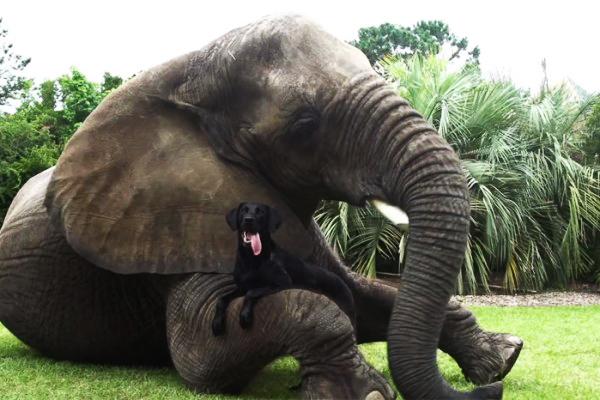 Un elefante ed un cane (5)