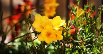 primavera-2014-(10)-F