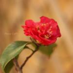 primavera-2014-(4)F