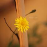primavera-2014-(7)-F