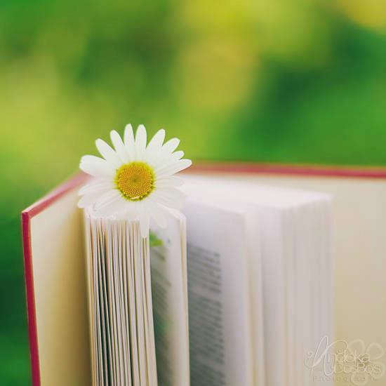 Libri primavera (4)
