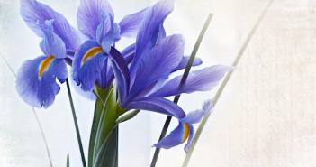 Iris messaggio