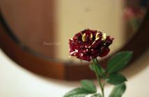rose pausacaffè (16)