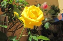 rose pausacaffè (18)