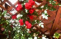rose pausacaffè (26)