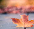 foglie-gialle-trilussa