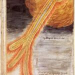 rappresentazione-di-joseph-boll-del-1704-cometa-la-catalogna