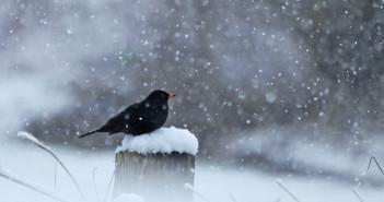 inverno-poesia-roberto-piumini
