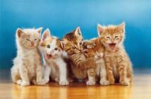 11 Walter Chandoha, il sommo fotografo dei gatti